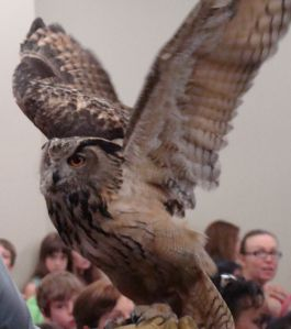 Owl with wings open_1