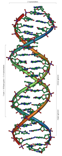 DNA_Overview